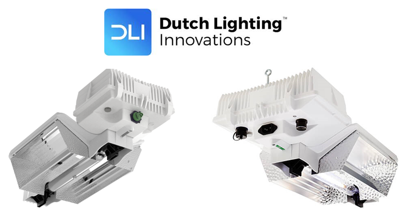 Dutch Lighting