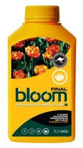 Bloom Final