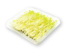 Fresh Organic Living Snow Pea Shoots (Golden)