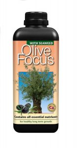 Olive Focus 300ml