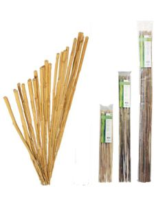 Bamboo Stakes 5ft, pk 25