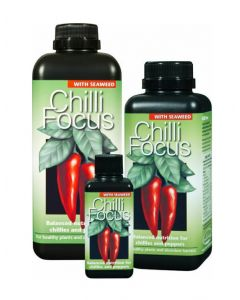 Chilli Focus With Seaweed